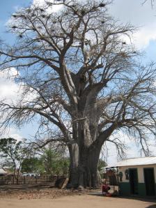 Baobab escolinha